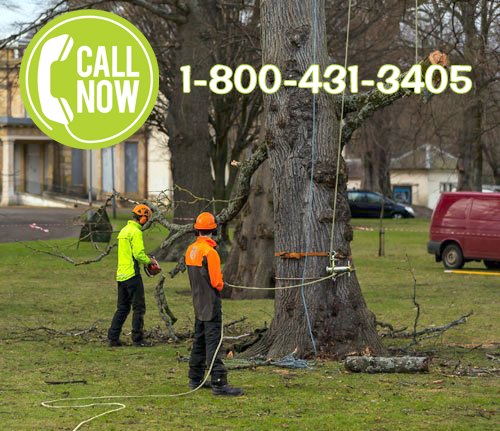 Tree removal service philadelphia pa philadelphia tree trimming disease damage or concerns about safety are some of the reasons you may need to have a tree removed from your property what was once an asset solutioingenieria Gallery